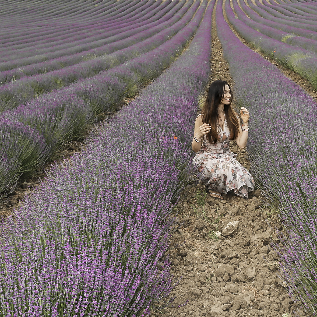 how to go to lavender fields in provence from paris